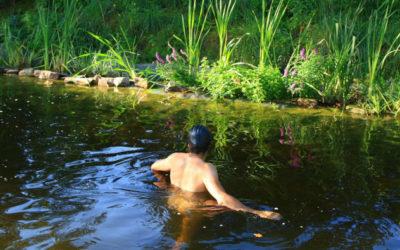 Schwimmbecken oder Gartenteich? Schwimmteich!